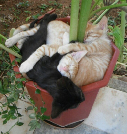 Growing  a pot of of greens  kittens!  LOL! llbwwb:  My Summer Karma Crop is Coming in Nicely,via:cutestpaw. Todays Cuteness :)