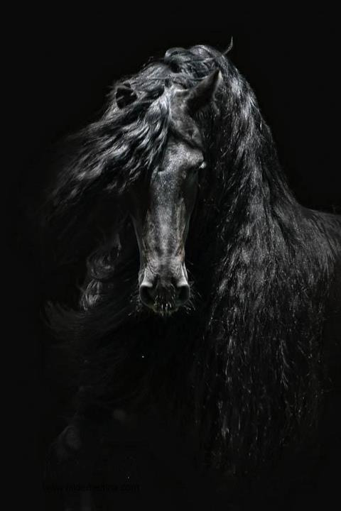 Black Beauty :D