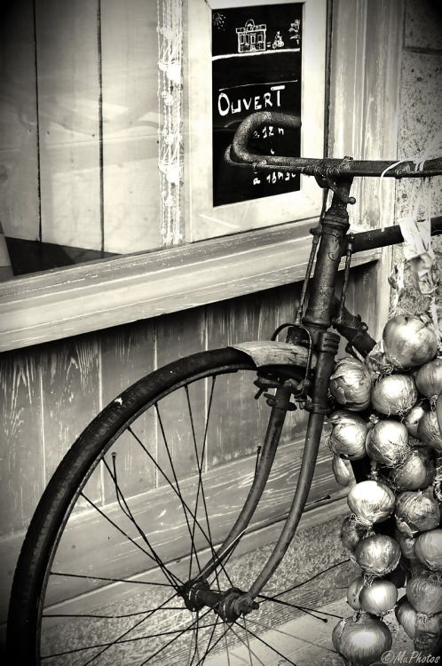 muphotos:  onion bicycle…