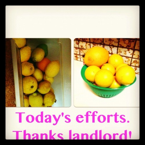 #oranges #lemons #healthy #free  (Taken with Instagram)