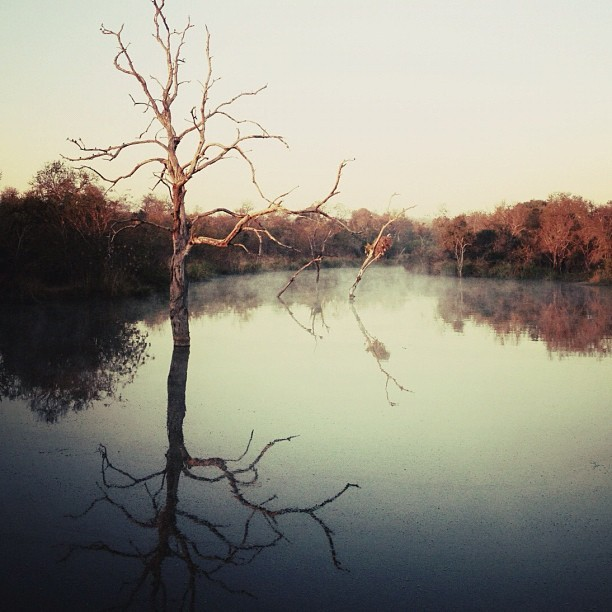 Morning mist @londolozi (Taken with Instagram at Londolozi Game Reserve)