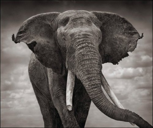 mona-lena: Nick Brandt Photography