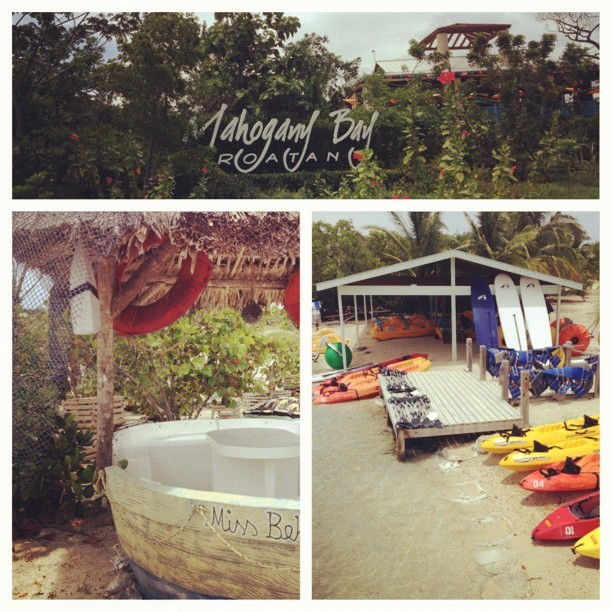 Mahogany Bay, Roatan, Day 5! Sunbathing and goodweather. ☀🌺🌻🐚😊 #roatan #beach #softsand #goodweather #humid #goodvibes #sea #ship #flowers #tropical #artistic #sunshine #summer #happy #vacation #travel #carnivalcruise #bestfriend #fun #day5 (Taken with Instagram at Roatan Island, Honduras)