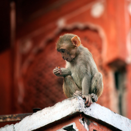 Monkey on the roof..