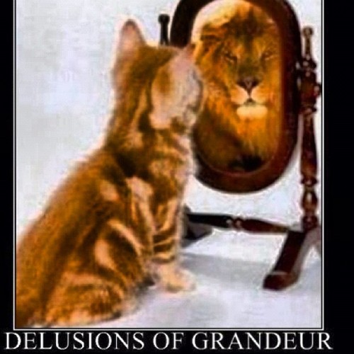 Lil ass kittens look in the mirror and see themselves as full grown lions , gtfohwtbs (Taken with Instagram)