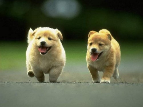 Here, look at these puppies. :)