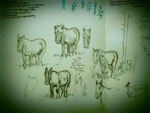 Trying to draw horses on a rainy day. They're are standing nice n' still though.