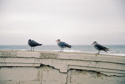 floeurs:  3 Seagulls by Quiet Corners on Flickr.