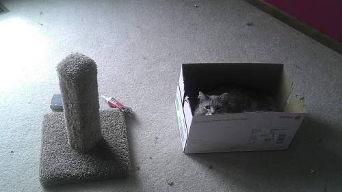 get out of there cat. i have stuff to do and you choose to sit in the box i need with your toy sitting right there!