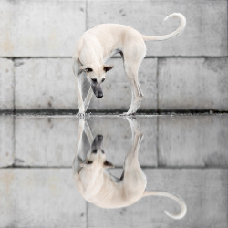 """Reflections"" by Elke Vogelsang"