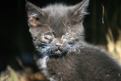 A small kitten is injured after a blaze fueled by strong winds swept through a neighborhood in Mountain Home, Idaho
