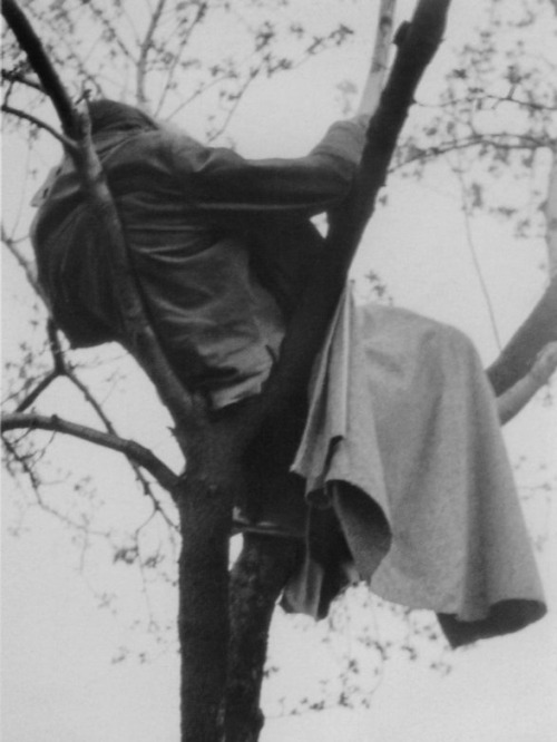 "Sleeping in a tree, Prague, April 1975 by Petr Stembera.  ""After three days and nights without sleep I spent the fourth night in a tree."""
