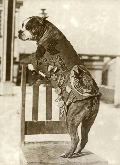 talesofwar:  Stubby the dog, the most decorated dog of WW1. He participated in 17 battles and was promoted to sergeant in combat. You can read his full story here.