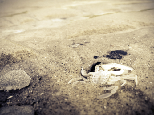 Low tide, dead things.