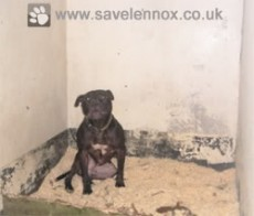 Lennox Locked In His Inhumane Belfast Council Contracted Kennel Surrounded With Sawdust For Bedding & His Own Faeces  Save Lennox!  http://www.savelennox.co.uk http://www.savelennoxpetition.co.uk http://www.savelennoxfacebook.co.uk http://www.twitter.com/savelennox http://www.youtube.com/savelennoxcampaign