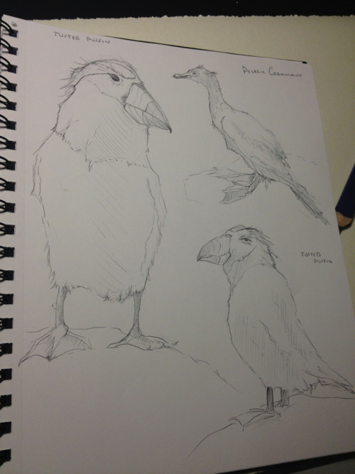 malloryhartart:  Birds from the museum yesterday in my animal anatomy class.