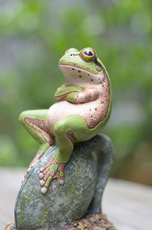 this is one amphibian who has had enough of your shenanigans.