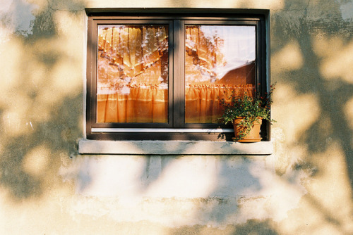citiesinflames:  Window Curtain Flower Sun Shadow by graufuchs on Flickr.