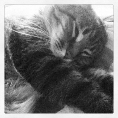 Sweepy baby #erwin #thesmerz #catsofinstagram #neko #gato #kitty  (Taken with Instagram)