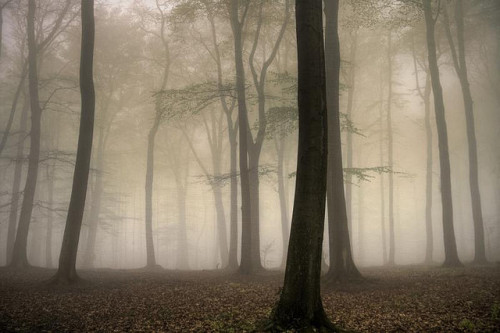 mykindafairytalee:  stillness by Dyrk.Wyst on Flickr.