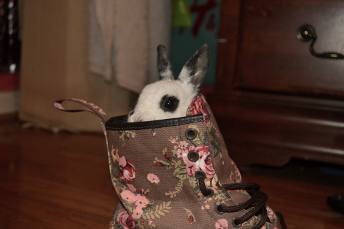 There's a bunny in my boot.