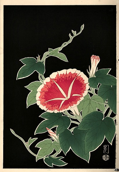 stilllifequickheart:  Unknown (Japanese) Pink Morning Glory 1950