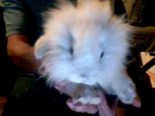 carathekoreanadian:  I'm on vacation and away from my rabbits, so I'm Skyping with them. ;)