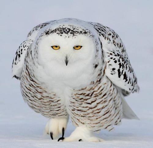 llbwwb:  The cold look! by David Hemmings