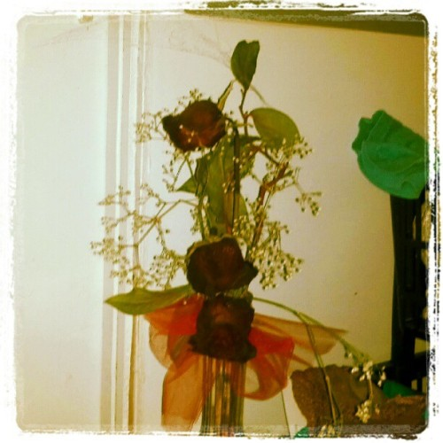 #photoadayjuly #dayseven #instagram It's the closest thing I have to a #garden.  I've had these #roses since #january (Taken with Instagram)