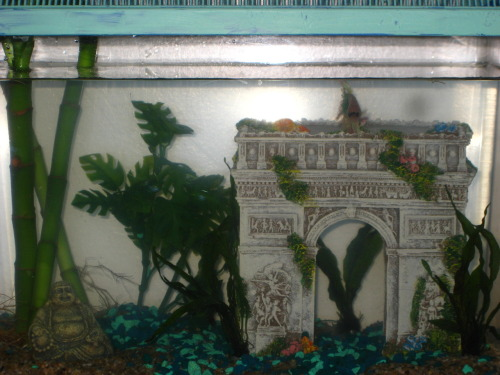 the-fish-whisperer: Beauty Queen Nipper's new digs. He loves it! And so do I. I painted the lid. What a beautiful fish and beautiful tank.