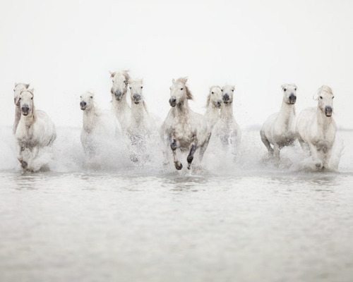 The power of 10 - Horse Photograph (by IrenaS)