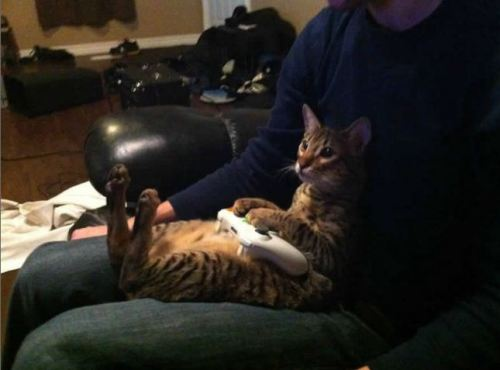Cat Playing Xbox | CuteStuff.co - Cute Animals, Cute Pictures, Cute Videos and MORE!