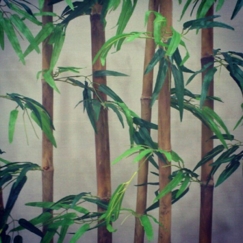 #bamboo  (Taken with Instagram)
