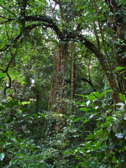 w-ildbear:  Jungle (by Accretion Disc)