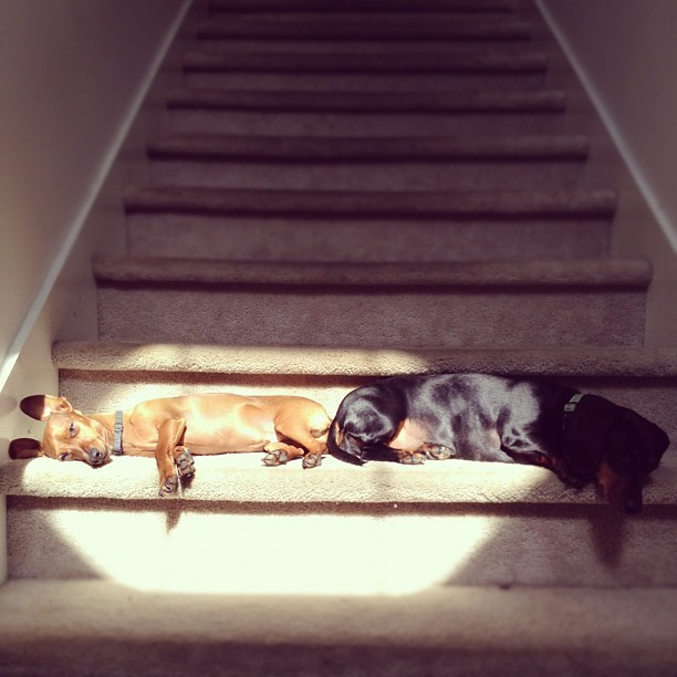 napping in the sun (Taken with Instagram)