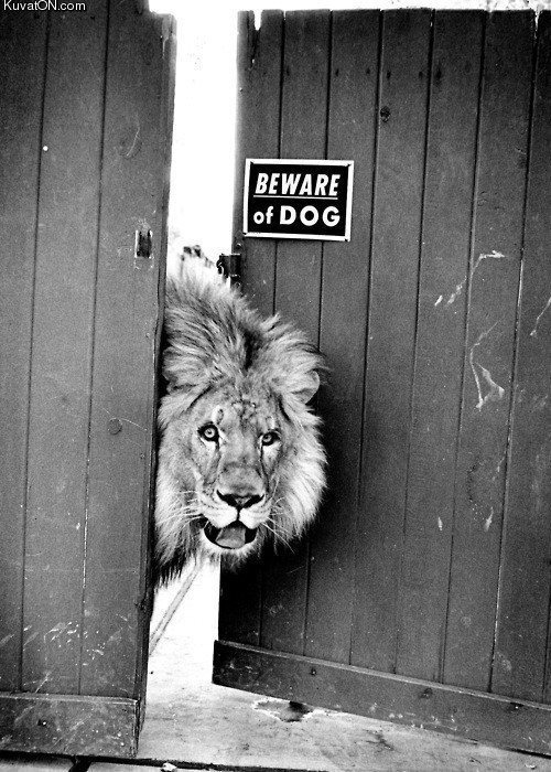 hiwilliam:  (via animal, black and white, cute, lion - inspiring picture on Favim.com)