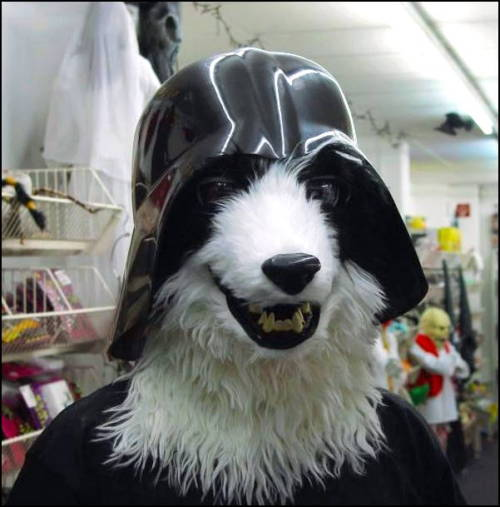 Darth Marlo
