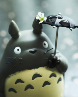 fuckyeahjapanandkorea:  Oh Totoro! Spring time! by killncatch