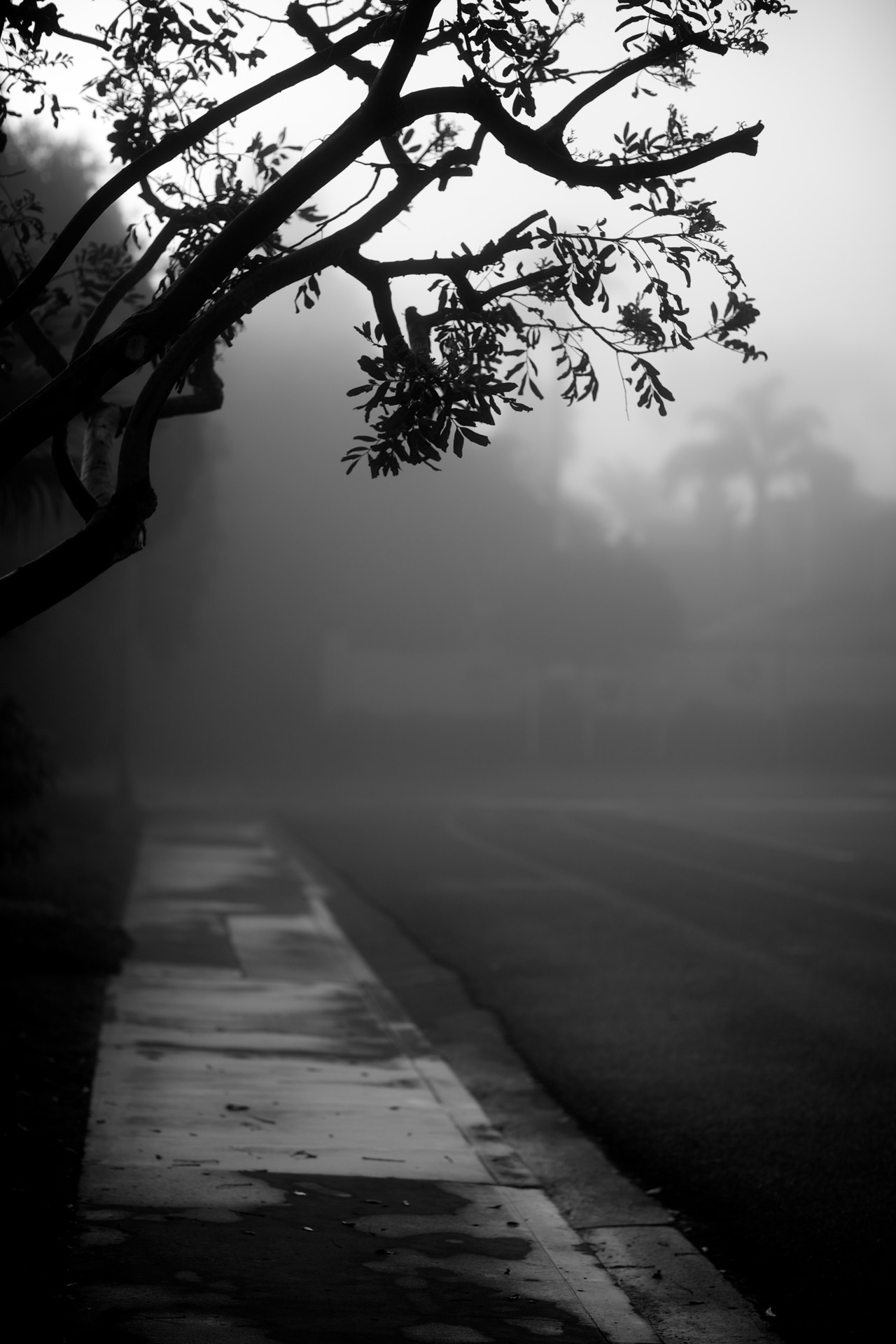 justjulespictures:  fog on lake drive