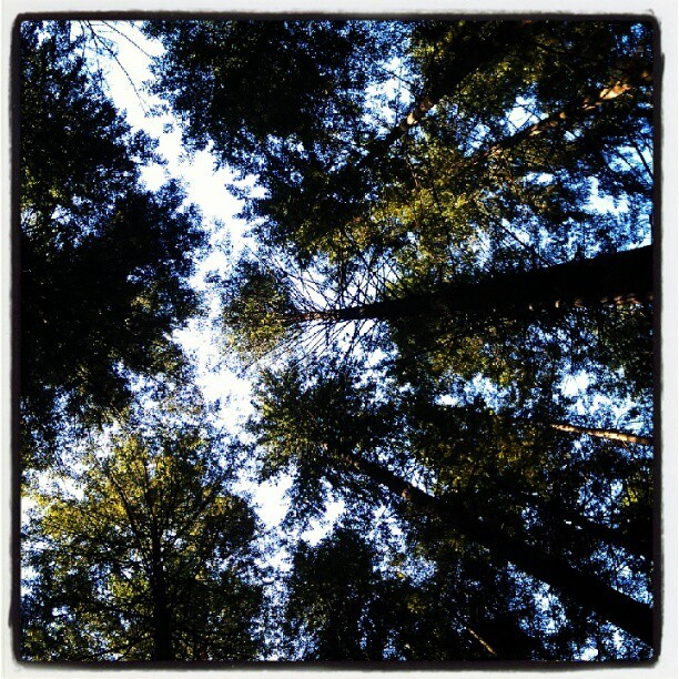 Taken with Instagram at Pacific Spirit Regional Park