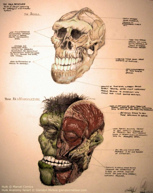 Incredible Hulk Anatomy by Glendon Mellow (via Scientific American)