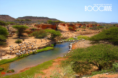 Boocame, Puntland. Boocame is an ancient town in the district of the same name. It is located in the Sool region of Puntland and serves as the commercial centre for the largely agricultural surrounding communities.
