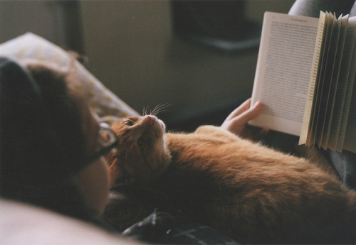 rapmemute:  read me! by Maarten Donders on Flickr.