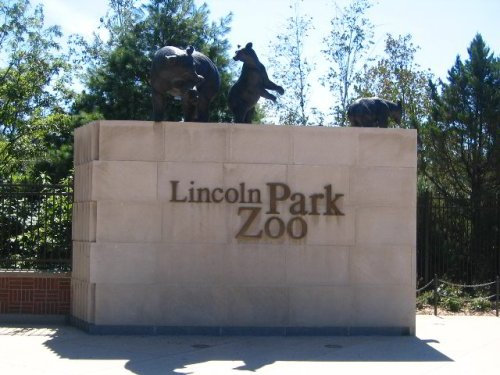 Chicago Itinerary in Pictures → Lincoln Park Zoo: I haven't been to a zoo in many a year and it's free