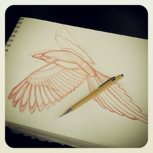 Another Magpie in the works. #bird #sketch #tattoo #tattooapprentice  #design #magpie (Taken with Instagram)
