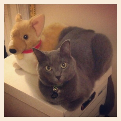 Remo & Ein. #cattweets (Taken with Instagram)