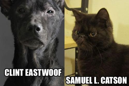 moonscreations:  Clint Eastwoof and Samuel L. Catson