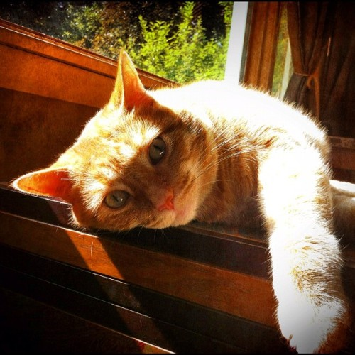 #cat #cats #sunshine #sunlight #sunbathing #light #lazy #smile #meow #orange #tabby #skittles #joeybroyles #aww  (Taken with Instagram)