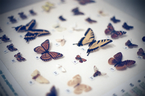 Encased Butterflies (by flossyflotsam)