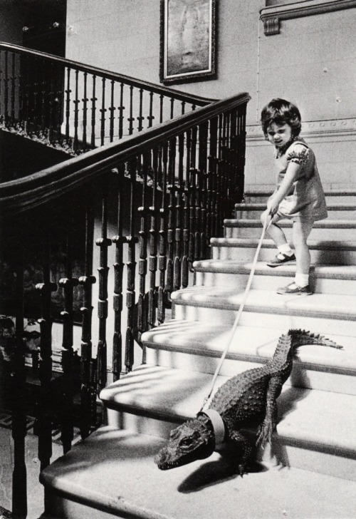 m3zzaluna:  descending a staircase in a house once lived in by britain's naval hero admiral horatio nelson, a pet crocodile is led on a tour of her home by a four old girl photo by john drysdale, cricket st. thomas, england, 1976